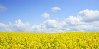 Jak powinna być realizowana ochrona upraw